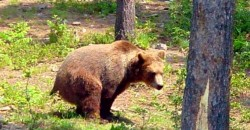 Does a bear _ _ _ _ in the woods?