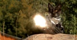 zombie-cat-movie-720