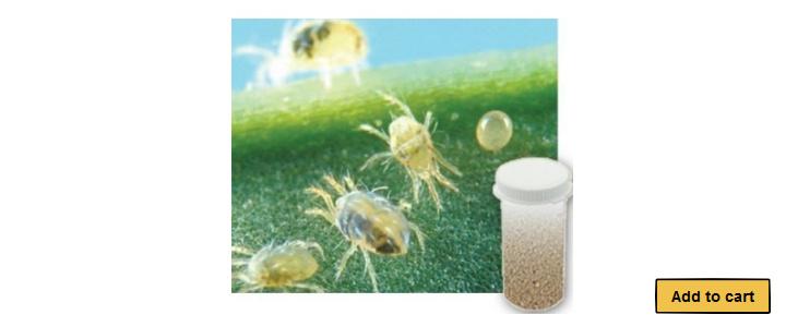 2,000 Live Adult Predatory Mites