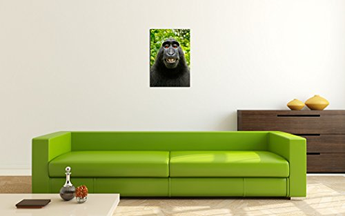 Monkey Selfie Premium Canvas Art Print 16x24 Inch Large Animal