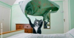 """""""Thanks For Helping Me Fold The Fitted Sheets"""". Said no-one. To their cat. Ever."""