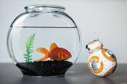 Sphero-Star-Wars-BB-8-Droid-0-7
