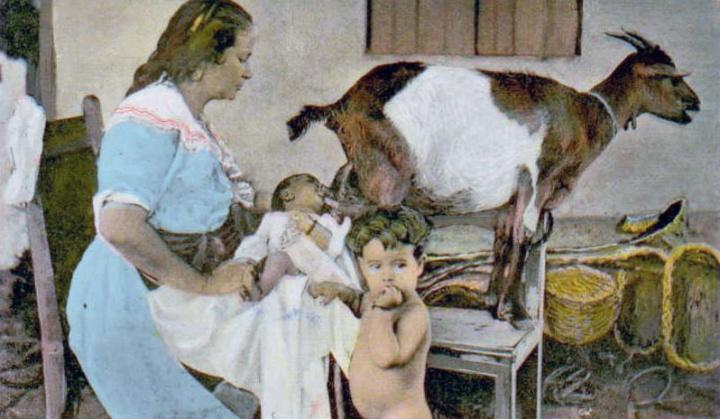 human-animal-breastfeeding-720