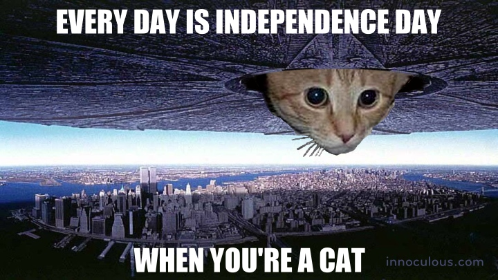 Every day is Independence Day. When you're a cat.
