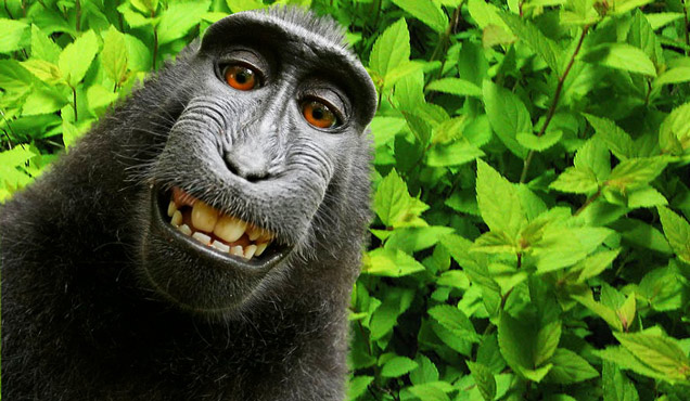 Monkey Selfie