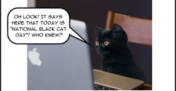 national-black-cat-day-feat