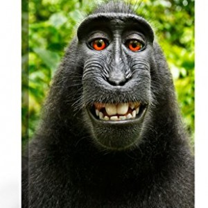 MONKEY-SELFIE-Premium-Canvas-Art-Print-16x24-inch-Large-Animal-Wall-Art-Deco-Canvas-Picture-Stretched-on-Wooden-Frame-as-Modern-Gallery-Artwork-e6625-0