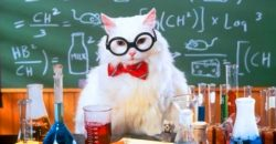 chemistry-cat-feature