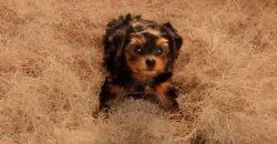 key-peele-cute-puppies-720